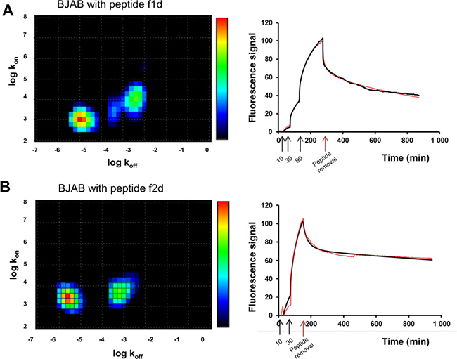 Divalent peptides f1d and f2d present differences in BJAB binding modes.