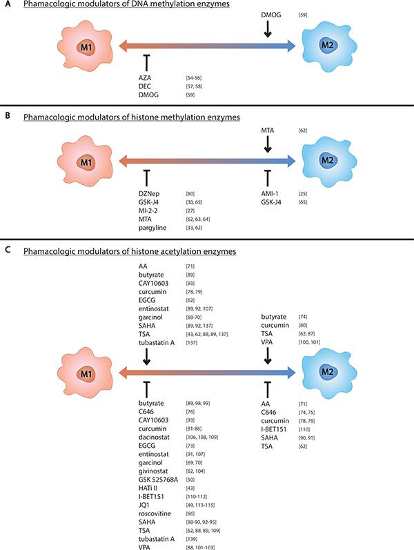 Pharmacologic modulators of epigenetic enzymes influence macrophage phenotype.