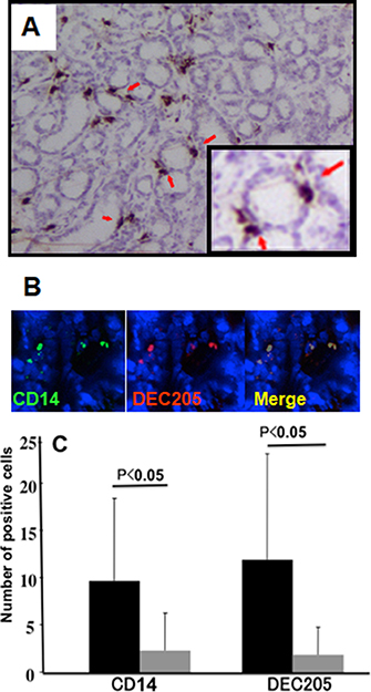 Expression of DEC-205 on macrophages in human gastric mucosa.