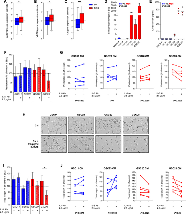 IL-8 is upregulated in MES GSCs and mediates in vitro angiogenesis.