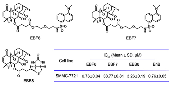 Chemical structures of EBF6, 7, EBB8 and their cytotoxicity against SMMC-7721 cells.