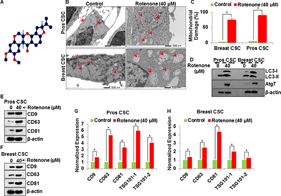 Molecular mechanism of exosomal release from the rotenone (40 μM) treated prostate and breast CSCs.