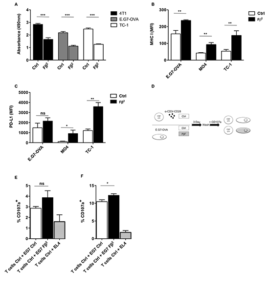 Tumors treated with Fβ2 show lower proliferative rates and express increased levels of MHC I and PD-L1.