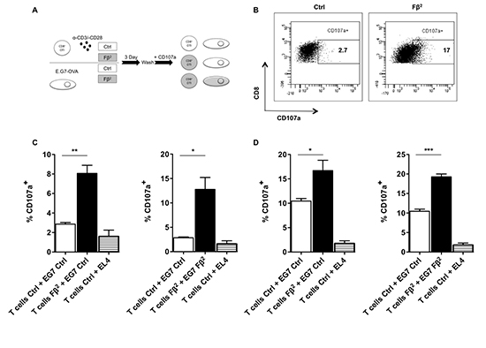 Simultaneous exposure of tumor cells and CD8 T cells to Fβ2 significantly enhances the killing capacities of antigen-specific T cells.