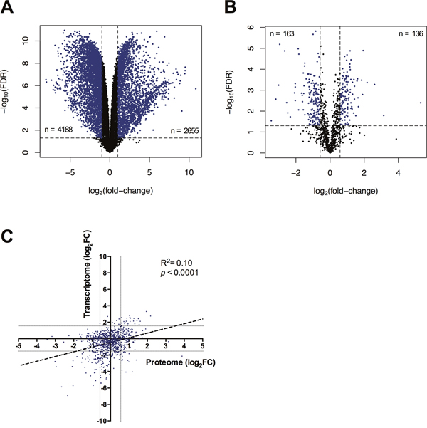 Molecular Changes To The Transcriptome And Proteome Of Imiod Treated Dft1 Cells