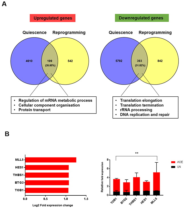 Gene expression signature of quiescence in AOE-reprogrammed tumour xenografts.