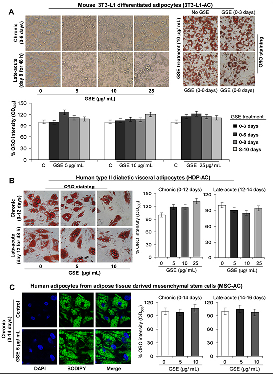 Effect of GSE on adipocyte differentiation and lipid accumulation in mature mouse and human adipocytes.