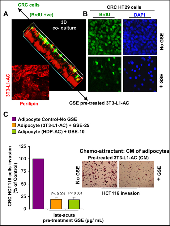 Effect of GSE on the growth promoting potential and chemotactic properties of adipocytes towards CRC cells.