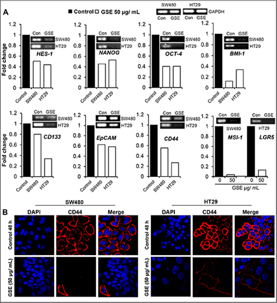 Effect of GSE on mRNA levels of CSC associated-signaling molecules, transcription factors, markers, and CD44 protein levels in CRC cells.