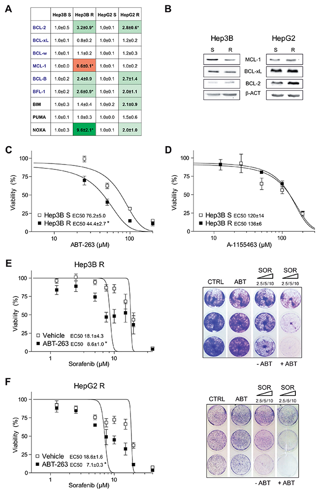 Sorafenib-resistant hepatoma cells exhibit mRNA changes in BCL-2 proteins and are re-sensitized to sorafenib by ABT-263 exposure.