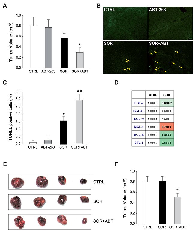 Sorafenib altered the mRNA BCL-2 pattern in vivo and ABT-263 increases sorafenib efficacy in murine subcutaneous HepG2 models.