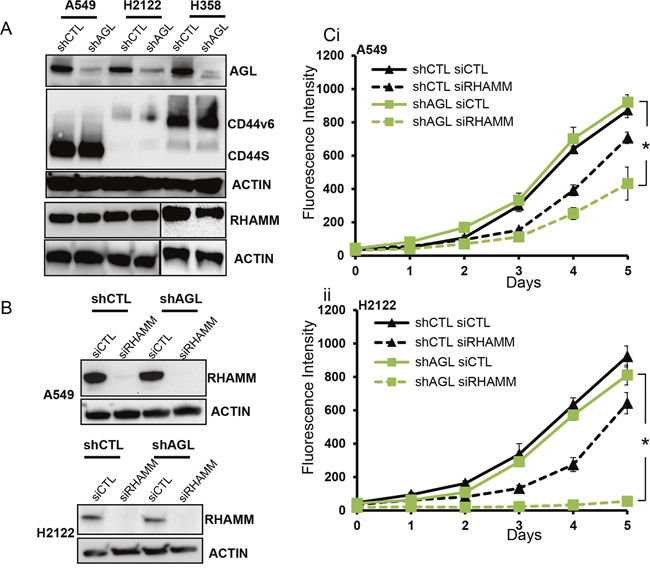 HA receptors and AGL loss in NSCLC.