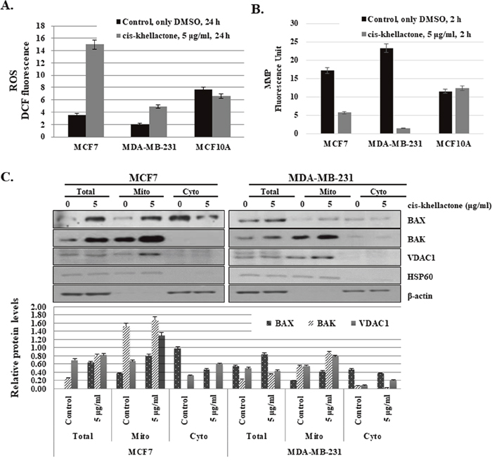 Effect of cis-khellactone on cellular levels of reactive oxygen species (ROS) and mitochondrial membrane potential (MMP).