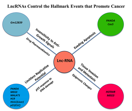 LncRNAs Control the Hallmark Events that Promote Cancer Initiation and Progression.