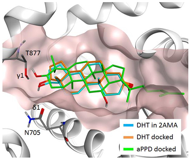 Predicted docking poses of dihydrotestosterone (DHT) (orange) and aPPD (green) in AR ABS, along with the DHT (light blue) in the 2AMA X-ray structure.