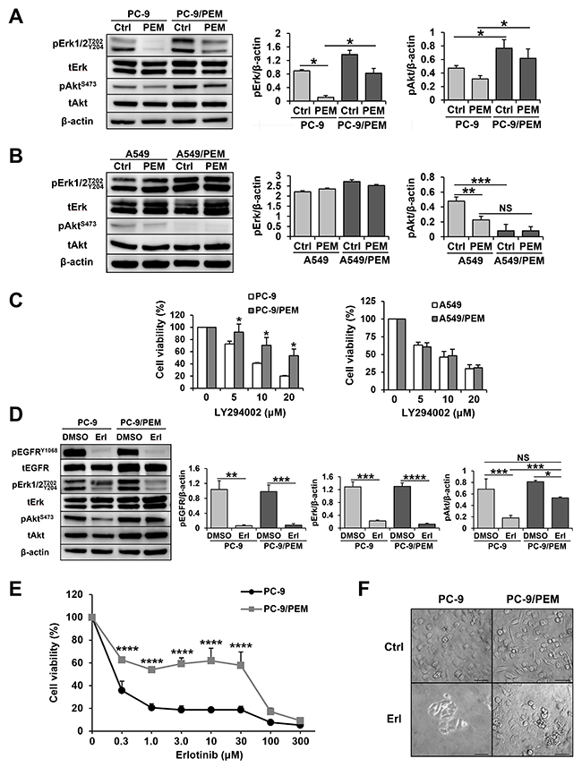 PEM treatment bestows EGFR-independent PI3K-Akt signaling activation on PEM-resistant PC-9 cells.