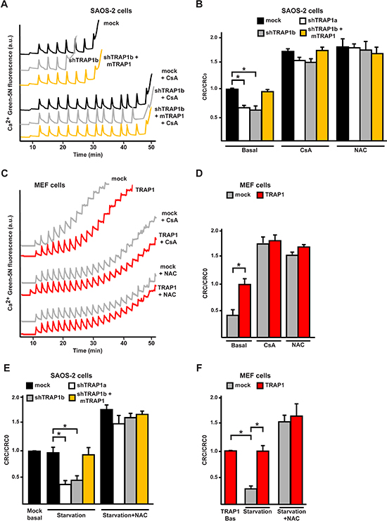 TRAP1 expression protects cells from PTP opening.