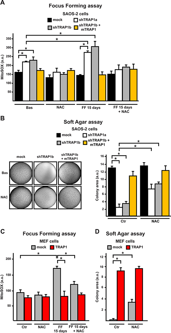 ROS inhibition enhances tumorigenicity in cells with low TRAP1 expression levels.