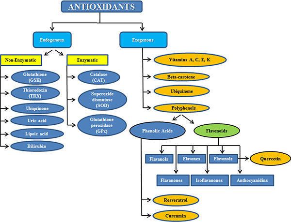 Subdivision between endogenous and exogenous antioxidants.