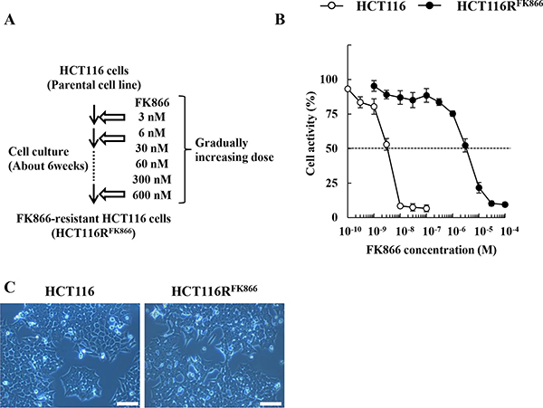 Establishment of HCT116RFK866, an FK866-resistant derivative of the human colon cancer cell line HCT116.