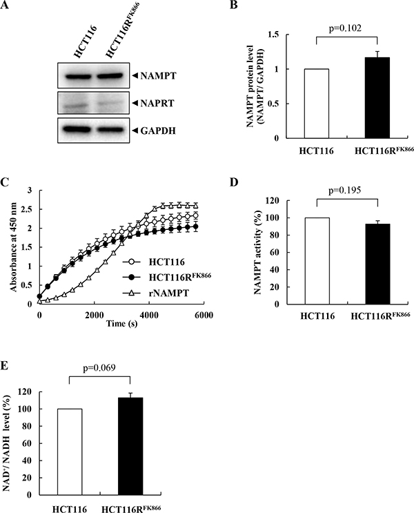Characteristics of NAMPT in HCT116RFK866 and parental HCT116 cells.