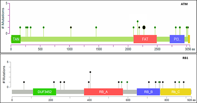 Illustration of missense (green) and truncation (black) mutations in ATM and RB1 genes in TCGA database.