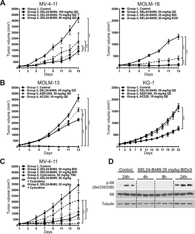 SEL24-B489 inhibits growth of AML xenografts.