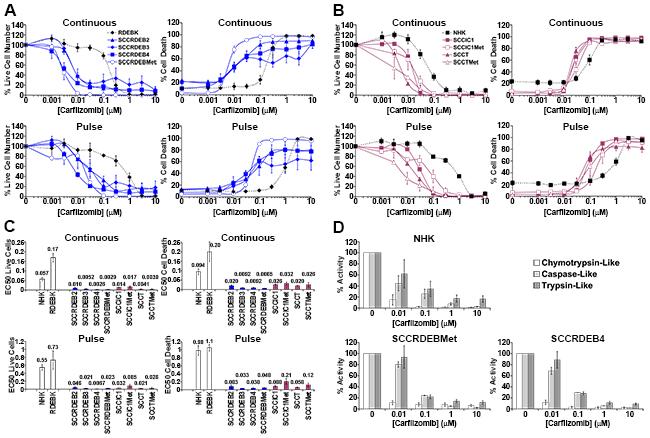 Carfilzomib exhibits more general anti-cSCC selectivity than bortezomib.