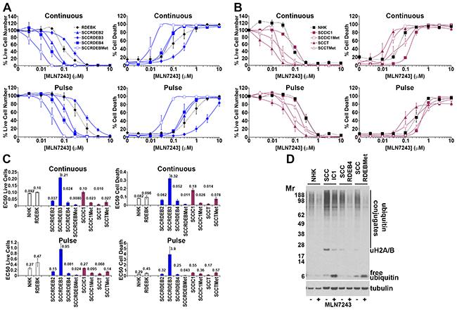 Bortezomib-resistant cSCC cells can be sensitive to MLN7243.