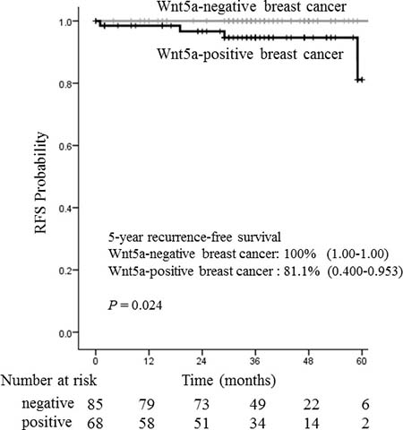 Relationship between recurrence-free survival and Wnt5a in 153 ER-positive breast cancer patients.