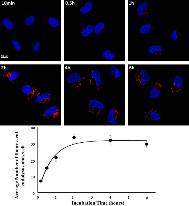 Kinetic study of cellular internalization of S15-APT QDs into A549 cells.