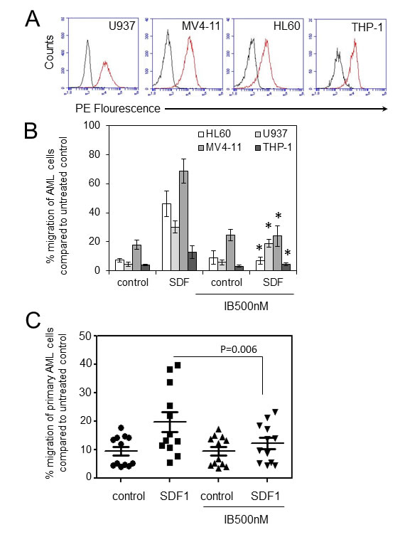 Ibrutinib inhibits AML cell migration in response to SDF-1 (A).