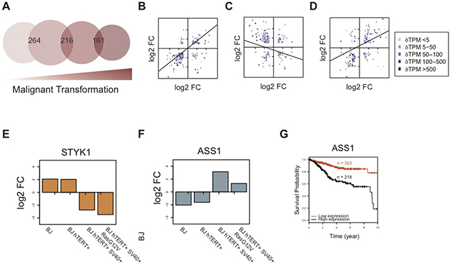 Comparison of hDEGs across the model reveals a shift in response to hypoxia after SV40-transformation.