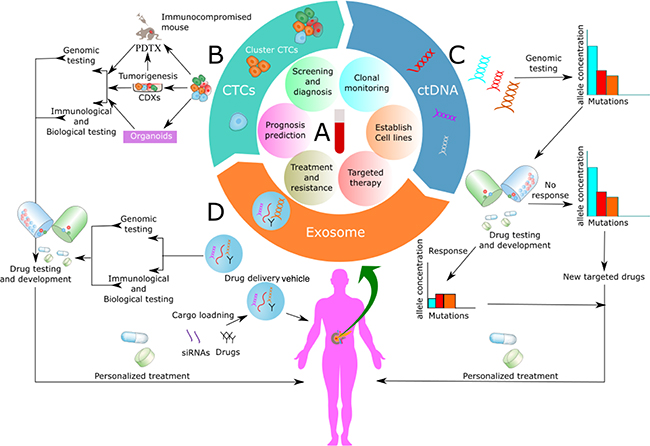 Oncotarget | Liquid biopsy in pancreatic cancer: the