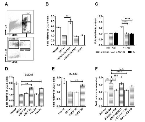 TAMs stimulate melanosphere formation.