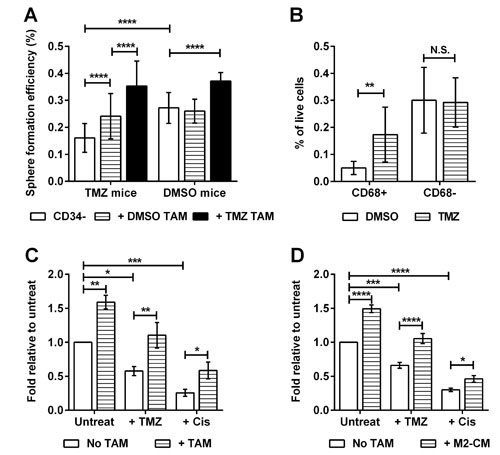 Chemotherapy promotes the emergence of macrophage-responsive TICs.