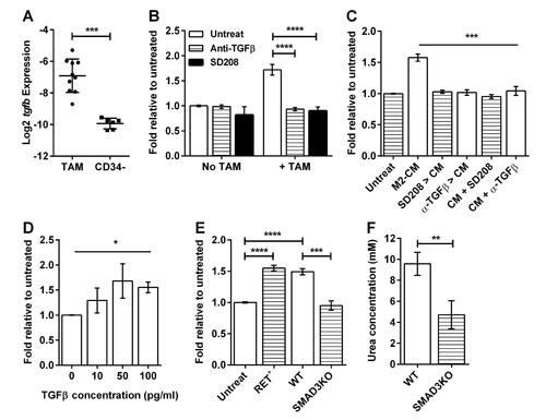 Macrophages stimulate melanosphere formation via TGFβ.
