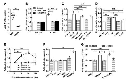 Macrophages stimulate melanosphere formation via the Arginase 1 pathway.