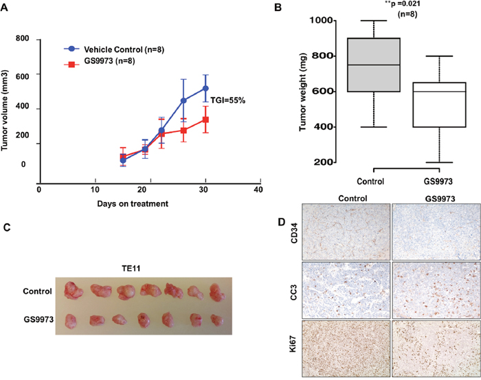 Effect of SYK inhibitor entospletinib/GS9973 on growth of subcutaneous xenograft of TE11 cell line.