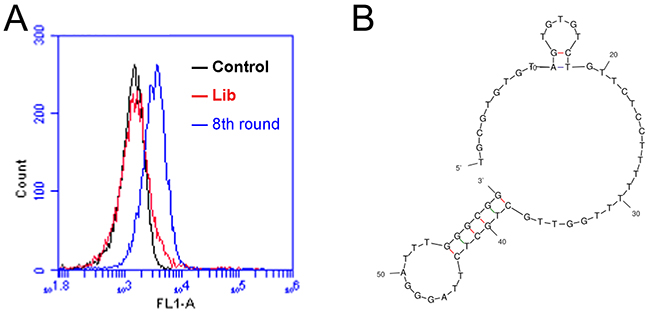 Flow cytometry monitoring of the enrichment of aptamers during selection.
