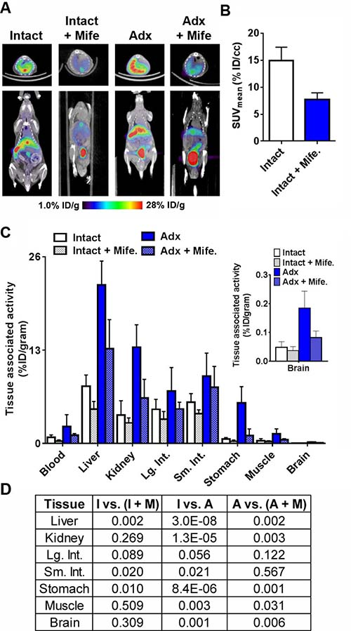 Evidence for the GR specific accumulation of 18F-GR02 in tumor naïve C57BL6/J mice.