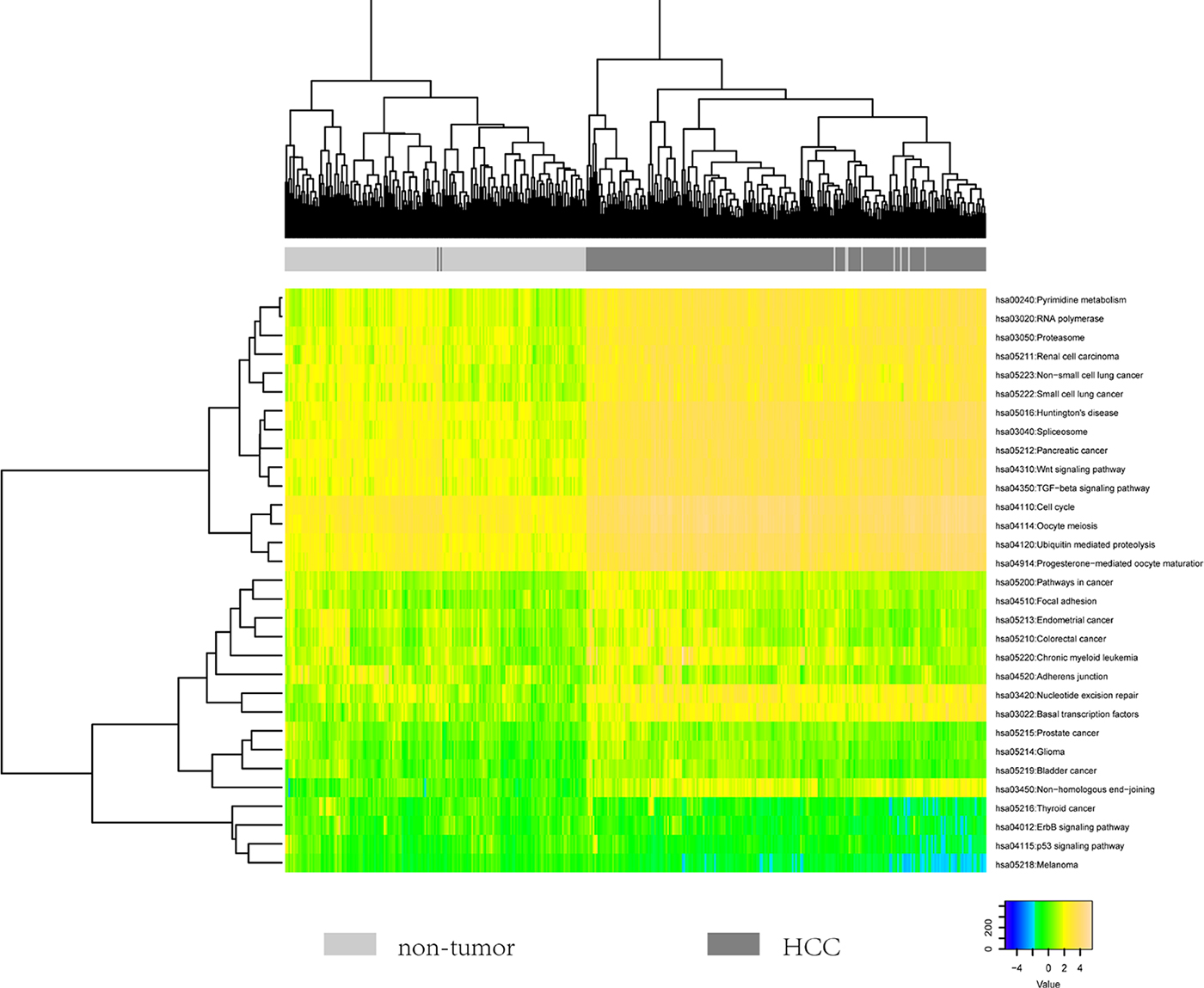 The heatmap showing the hierarchical clustering of all samples using the scores of 31 identified pathways.