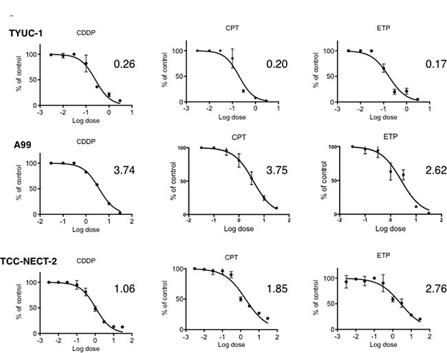 Dose-response curves of gastroenteropancreatic neuroendocrine carcinoma cell lines to CDDP, ETP and CPT-11 as single agents.