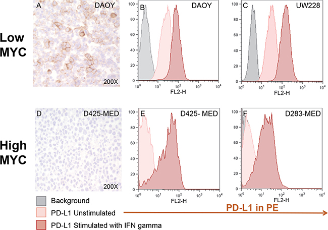 Medulloblastoma cell lines express PD-L1 in a subgroup dependent manner.