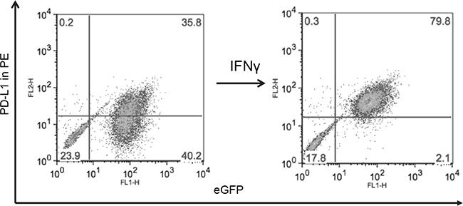 MYC overexpression in DAOY (YM21) does not alter PD-L1 expression.