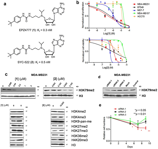 DOT1L inhibitors inhibited H3K79 methylation and proliferation of certain breast cancer cells.