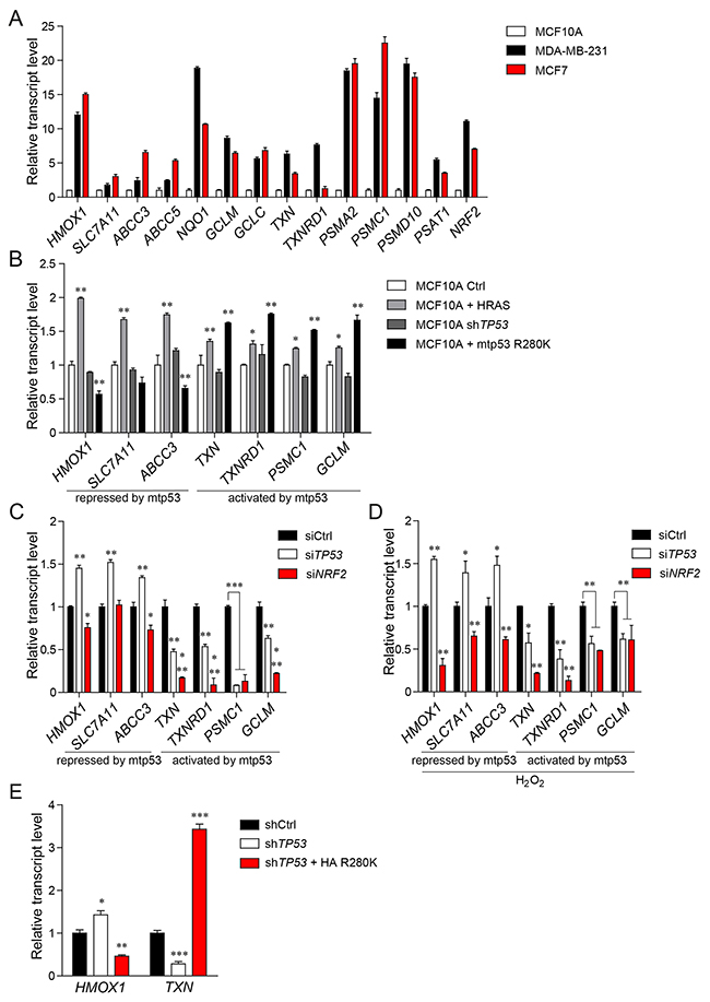 Mutant p53 differentially regulates the expression of NRF2 transcriptional targets.