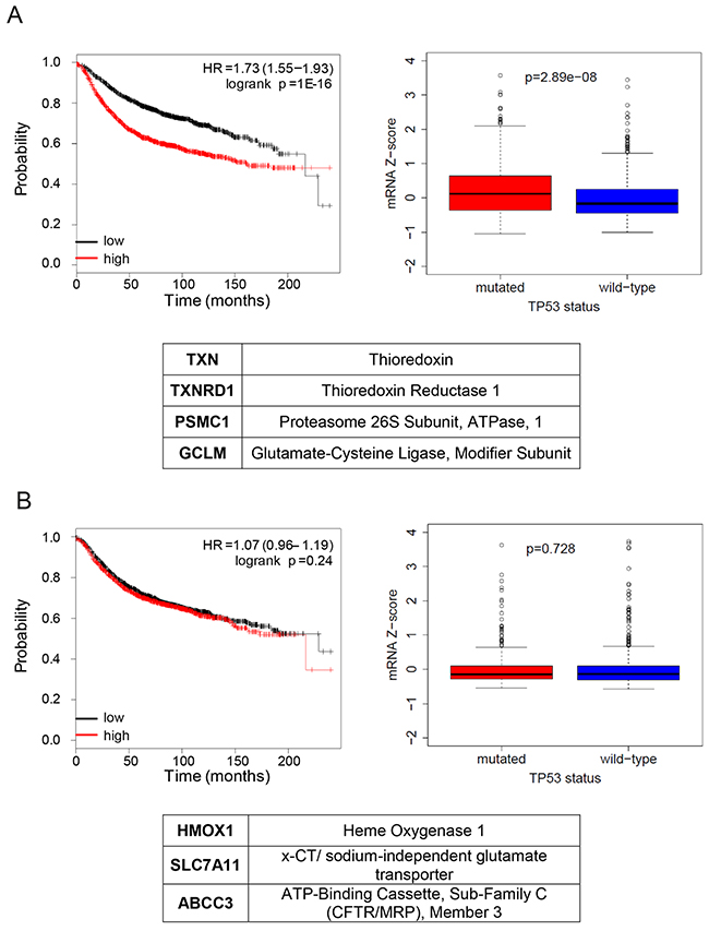 NRF2 transcriptional program activated by mutant p53 is associated with poor overall prognosis and with the mutant status of p53 in breast cancer patients.