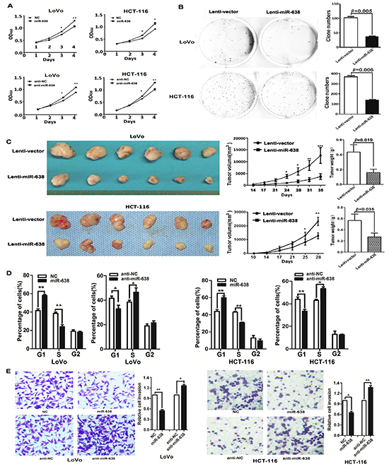 miR-638 inhibits CRC cell proliferation, invasion and regulates cell cycle progression.
