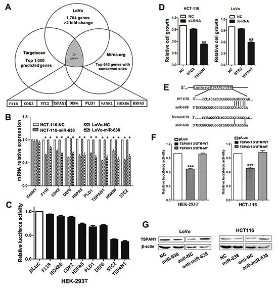Screening of candidate target genes of miR-638 in CRC.